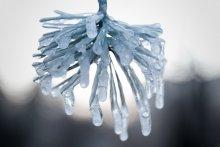 Frozen life / Зимняя прогулка