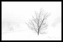зимний туман / .....