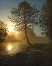 Пробуждение / Есть в Веснянке интересное дерево у реки. Это про него.  Приятного просмотра