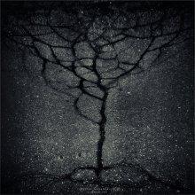 [ ...and on the asphalt trees grow ] / ...набродил на асфальте очередную обложку для CD :)