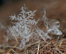 Снежинки кружились.... / Снежинки кружились....