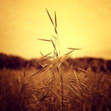 Травяной вечер / **********