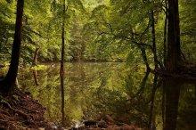 там, где живут водяные / Черногория, Биоградский заповедник
