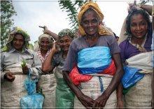 Тамилы / эти руки собирают нам Цейлонский чай...за 30$ в месяц