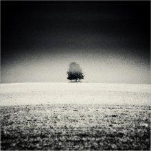 [ Lighting Wood ] / ...одно из многих моих любимых мест (...я про одиночные деревья)