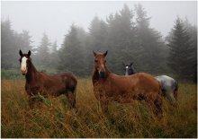 Встреча в тумане.. / Встреча в Карпатах одним туманным, дождливым августовским утром...