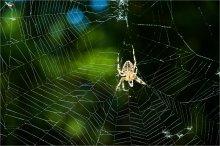 Про паука / Модная нынешним летом тема про пауков, после конечно стрекоз ;)