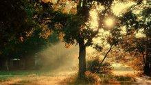 утренний свет / есть обработка в части цвета, свет- первозданный