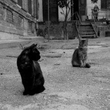 cats / ...в уютных гродненских двориках.