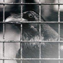 The Crow / старый ворон