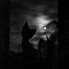 """MoonCat / Кадр сделан сегодня примерно в 04:30. На подоконнике """"сидит"""" деревянная фигурка кота, рядом с ней вазон, а за окном проносятся ночные тучки, освещенные холодной луной."""