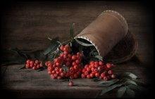 Рябиновые грозди / .........