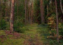 По лесным тропам / Осень