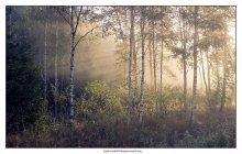 Туманный рассвет. / Утро туманное в Подмосковном лесу.