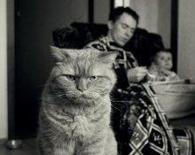 Послезавтрака / Эмоциональный портрет голодного кота (котофобам посвящается)