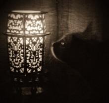 Пошукі сьвятла... / ...поиски света в ночи.