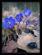 Доживем до весны / И даже жук в весенний день о чем-то там мечтает...