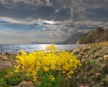 весенние берега / Крым, весна