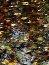 Осенняя мозаика / *****