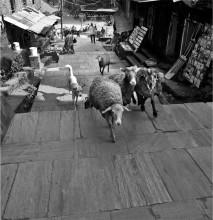 городские улочки / непал