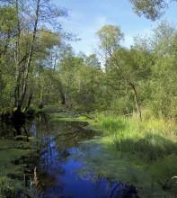 Лесная речка / река Вишня
