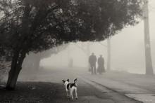 Туманная аллея. / Туманная аллея в парке.