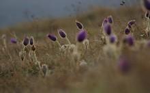 рассветные мысли / весна в горах.Крым.Чатырдаг.