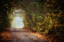 Autumn road / In the Autumn park, cold morning