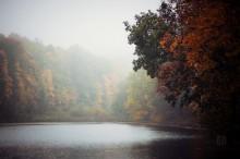 Autumn morning / fog&mystery