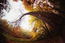 Осенняя загогулина / На такое вот дерево наткнулся при прогулке.