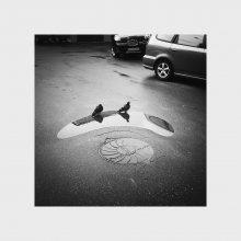 Без названия / про голубей