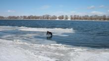 """из серии """"Окские пейзажи - 1"""" / немного обработки. Пёс плавает хорошо"""