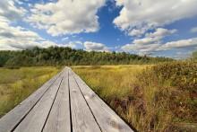 на болоте / дощатая тропинка через болото, Березинский заповедник