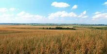 август пора урожая / поле поле