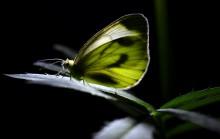 Спящая бабочка / ***************