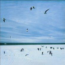 Про птиц и людей... / ...и холодное море