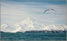 на Камчатке... / Тихий океан. Вилючинская сопка, Вилючик, потухший вулкан на Камчатке. Высота 2173 м. Крутой, почти правильный конус (стратовулкан) изрезан глубокими радиальными бороздами (барранкосами). Кратера нет. На склонах — языки застывших лавовых потоков; у северных подножий шлаковые конусы.