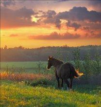 Дай-ка я разок посмотрю, где рождает поле зарю... / Конь, вечерний свет. http://www.practicerussian.com/Materials/SongPage.aspx?id=24&genre=0&sort=0