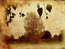 Осенние зарисовки / http://www.youtube.com/watch?v=evSJWvFP36E
