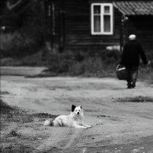 Белый Бим Черное Ухо / *****************