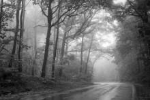 Elf Forest / Цветной вариант в ЖЖ http://max-helloween.livejournal.com/36863.html
