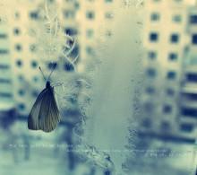 Бабочка зимой. / Вывелась в холодильнике в капусте,жила на подоконнике почти 2 недели..