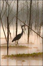 Утренние силуэты / Озеро в Кении