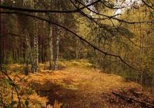 Осень рыжею лисицей... / **************