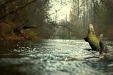 Осенние воды / .............................