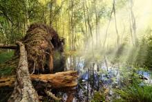 В лесу / *******