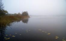 Осень,туман / ,,,,,,,,,,,,,,,