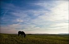 О лошадке, козах и облаках.. / Где-то под Новогрудком..