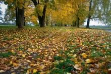 золотая осень / в Дисненском парке. шел дождь.