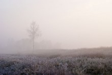 Туманным утром / ,,,,,,,,,,,,